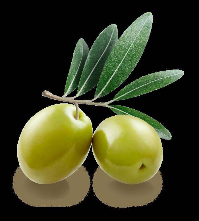 filière La Filière Olive