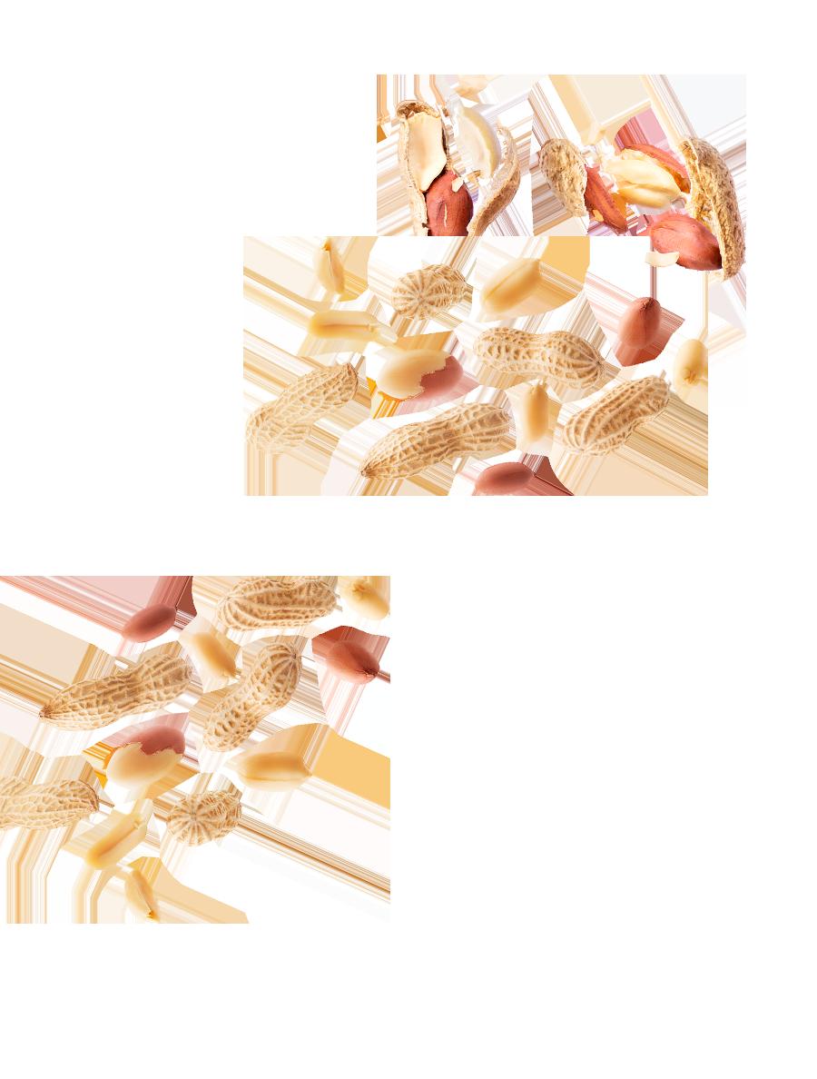 Cacahuètes en coque grillées Menguy's